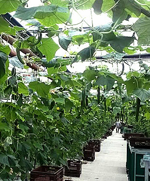 Traitagri Produits alternatifs agricoles Chaingy