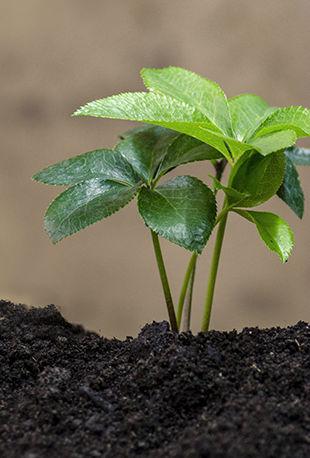 produits alternatifs agricoles à Chaingy (45)